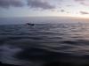 Antarctica_Peninsula_07.jpg