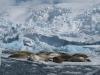 Antarctica_Peninsula_25.jpg