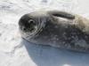 Antarctica_Peninsula_26.jpg