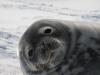 Antarctica_Peninsula_27.jpg